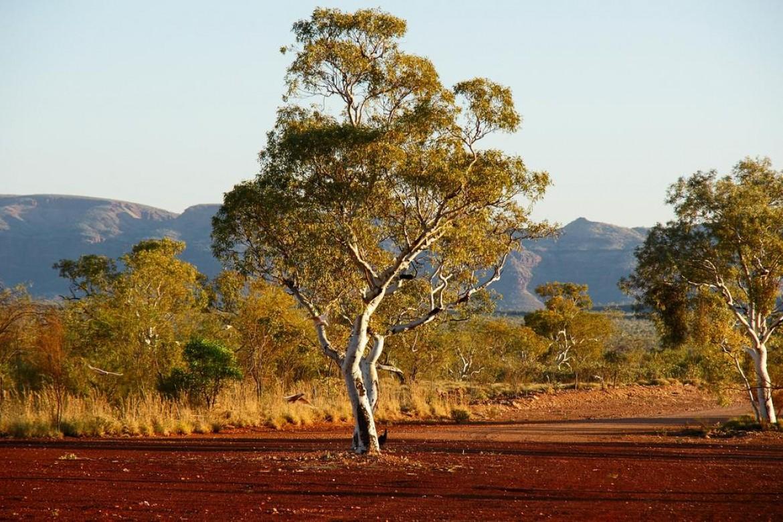 Tronar bulls now call the Pilbara home